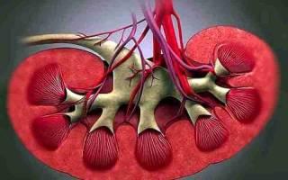 Почечная гипертензия симптомы