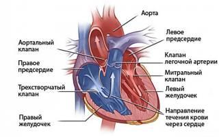 Признаки порока сердца у детей до года