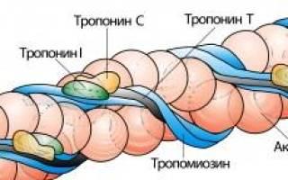 Тропонин т при инфаркте миокарда