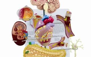 Гипертония органы мишени